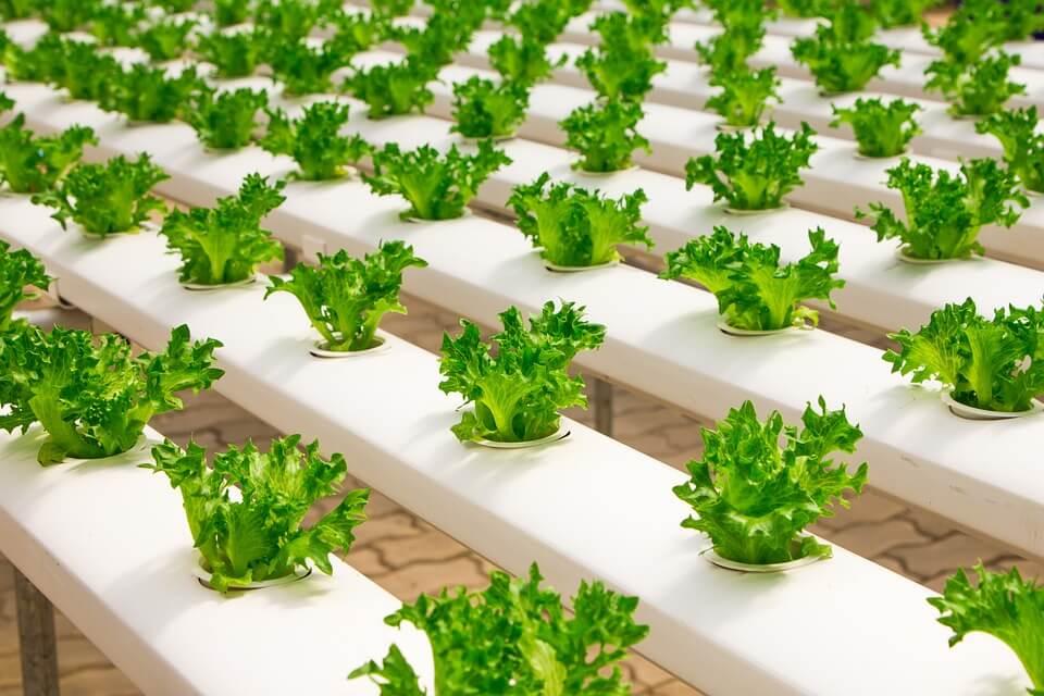 is organic food gluten free
